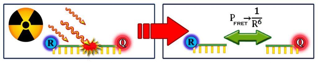 DNA Dosimeter Schematic
